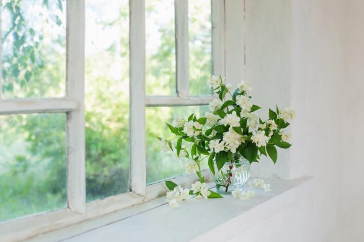 Plantes pour parfumer la maison