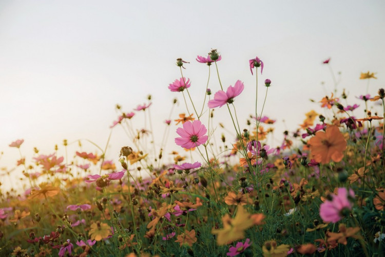 Avoir des fleurs pas cher