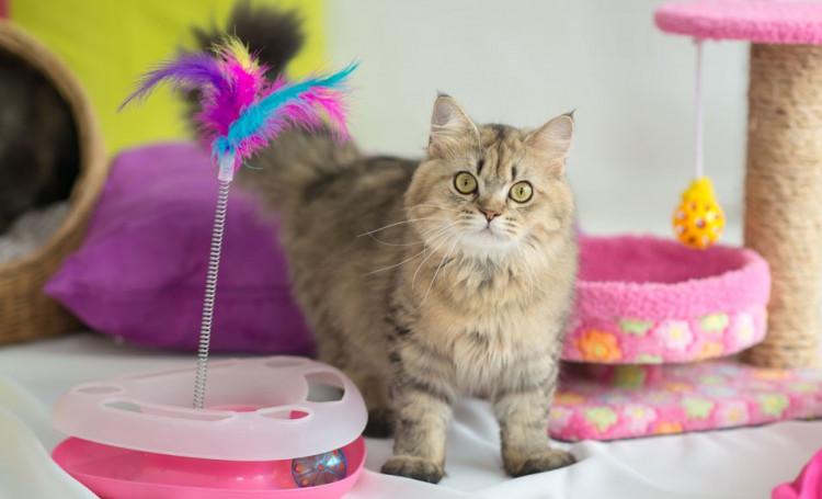 6 jouets à fabriquer pour son chat